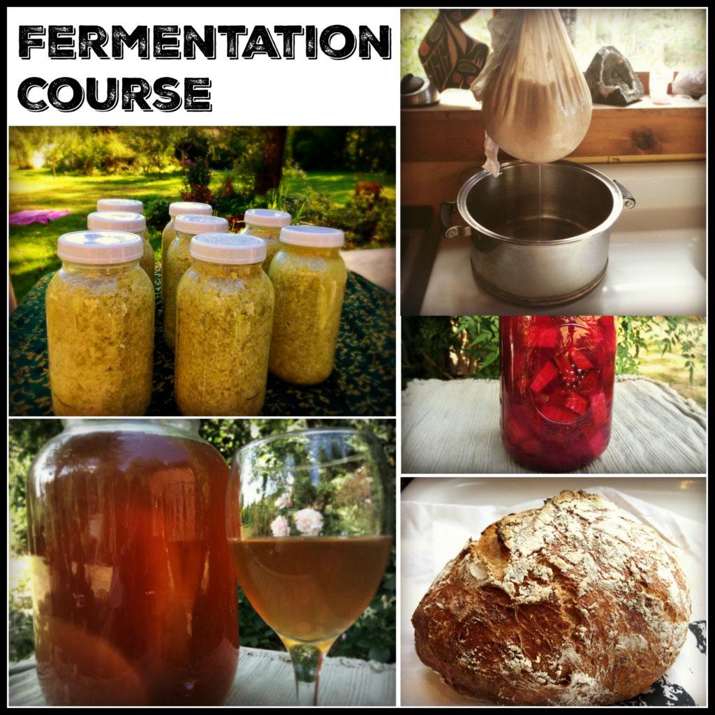 fermentation course banner 2
